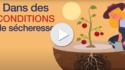 Vidéo_Stress_Sécheresse